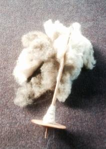 Raw Shetland wool spun in the grease